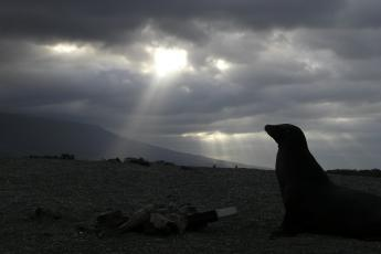 Sea lion below clouds on Fernandina Island 2