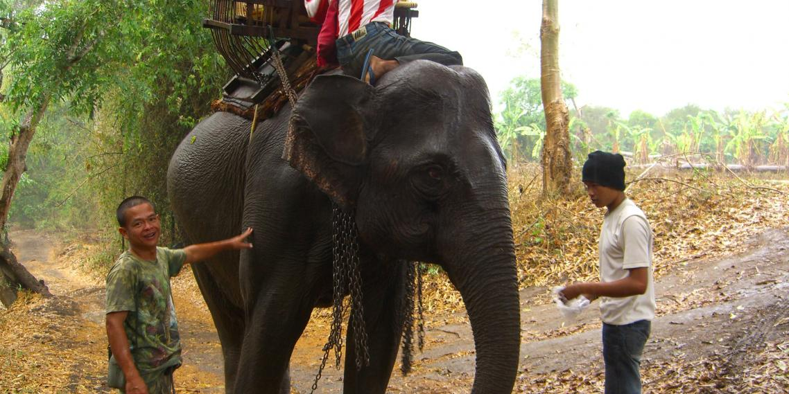 A jungle trek guide readies an elephant for a tourist