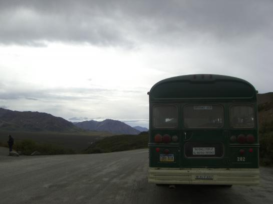 The Denali Park shuttles look like school buses stolen by Smokey the Bear.
