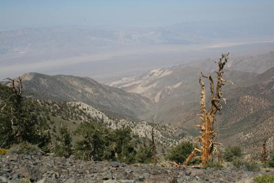 A parched tree teeters on the edge of a stunning Death Valley view.