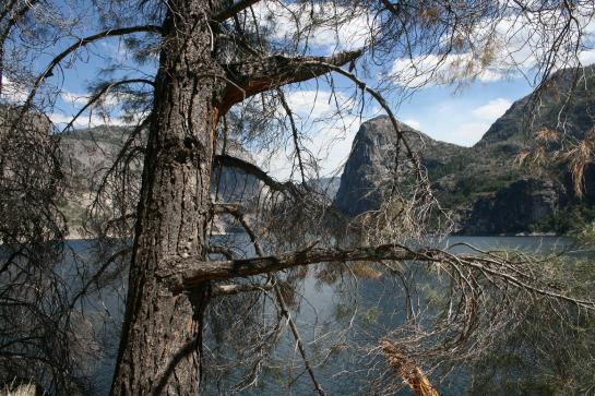 Hetch Hetchy reservoir view with tree