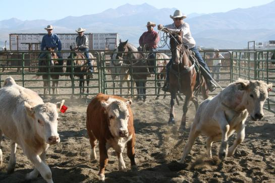 Team Branding at rodeo near Tuolumne Meadows in Bridgeport