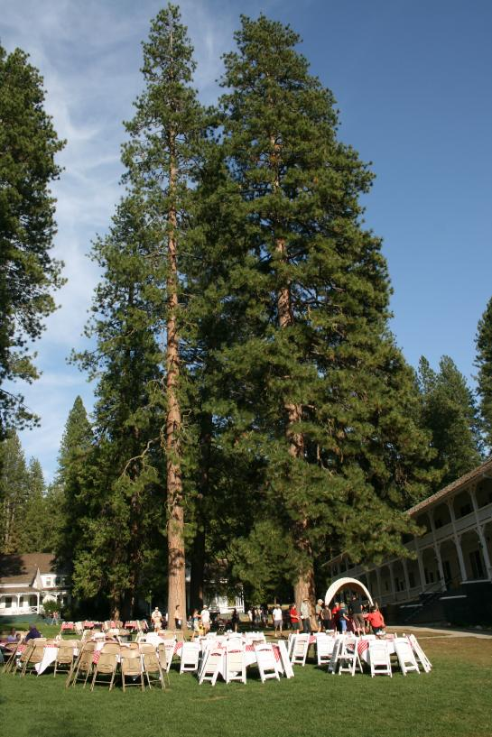 Chairs and tables sit below Sequoia trees for the Wawona Hotel Lawn Barbecue in Yosemite National Park.