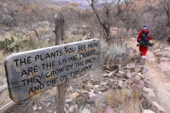 A sign reminds hikers to be respectful of plants in the Grand Canyon. (photo by Brian Leukart)