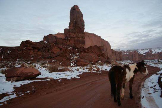 A horse appears in the middle of the road in Monument Valley near the Thumb on Camel Butte.