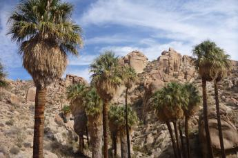 Beautiful Lost Palms Oasis sits at the end of a 3.5-mile trail in Joshua Tree.