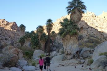 Hikers approach Summit Spring in Joshua Tree's Munsen Canyon.