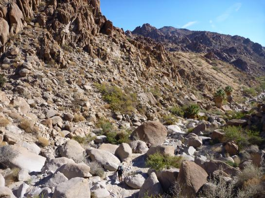 Hikers traverse boulders near Victory Palms Oasis.
