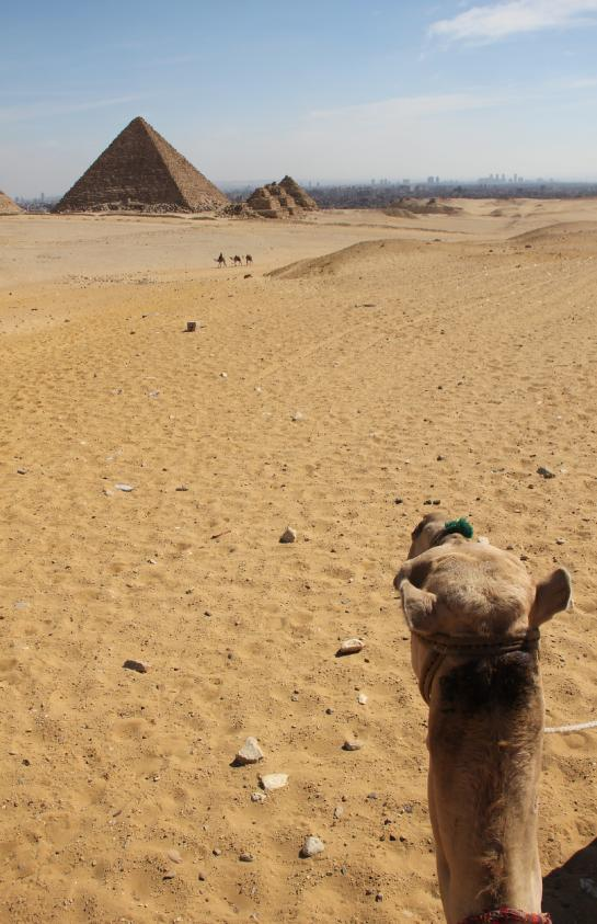 A camel walks toward the Pyramid of Mycerinus and the Queen's Pyramids outside Cairo.