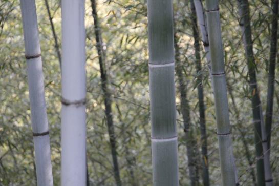 Green trees abound in the Mukeng bamboo forest.