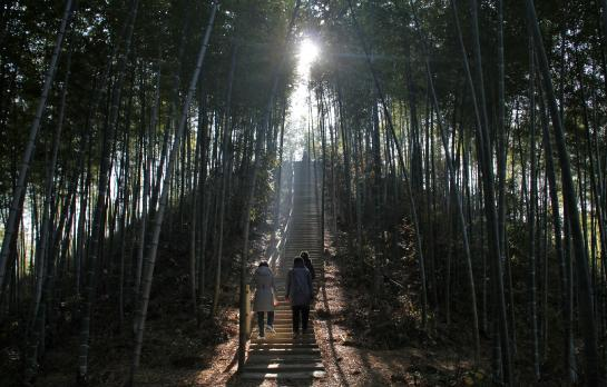 Chinese tourists hike through the Mukeng bamboo forest.
