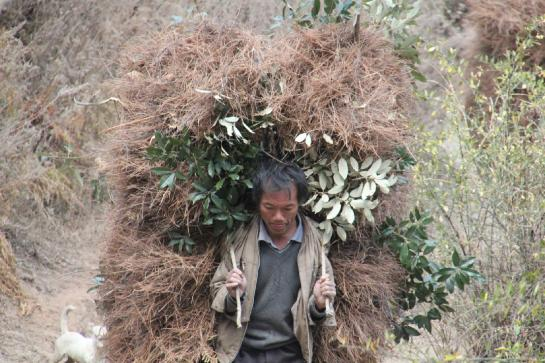 A man carries hay in in China's Tiger Leaping Gorge.