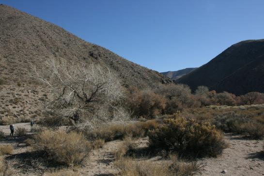 Hikers approach Cottonwood Springs in Death Valley.