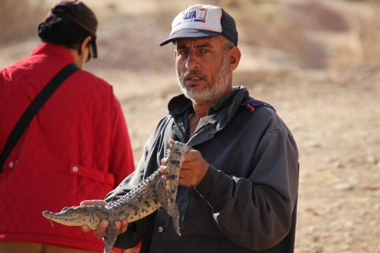 An Egyptian man tempts tourists with a crocodile near the Temple of Amada in Nubia, Egypt.