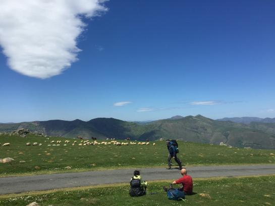 Sheep watch as pilgrims hike the Camino de Santiago through the French Pyrenees.