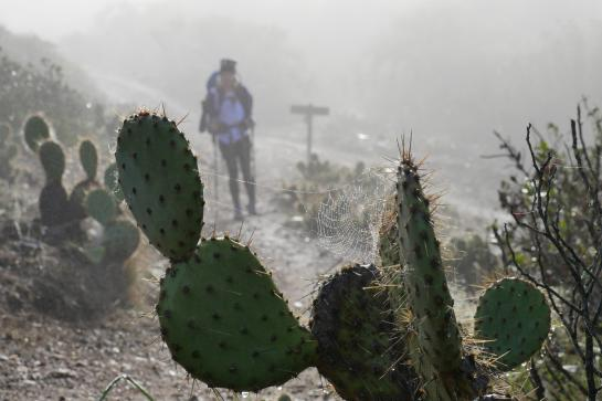 A spider web sits on a prickly pear in front of a hiker on the Trans-Catalina Trail.