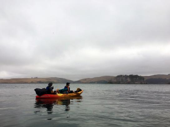 Kayakers gaze at Hog Island while paddling in Tomales Bay, California.